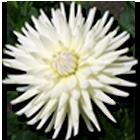 bloem_header_rechts